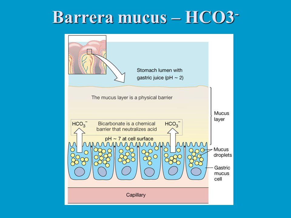 Barrera mucus – HCO3 -