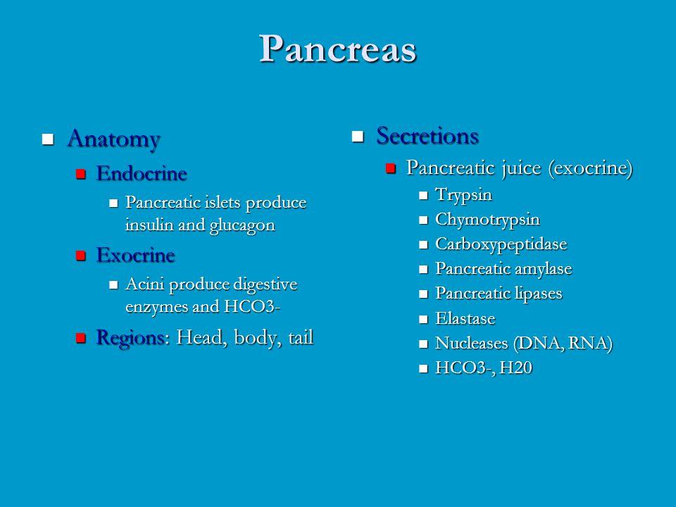 Pancreas Anatomy Anatomy Endocrine Endocrine Pancreatic islets produce insulin and glucagon Pancreatic islets produce insulin and glucagon Exocrine Ex