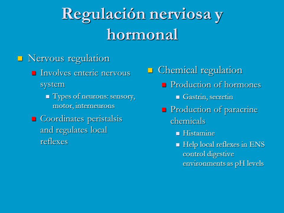 Regulación nerviosa y hormonal Nervous regulation Nervous regulation Involves enteric nervous system Involves enteric nervous system Types of neurons: