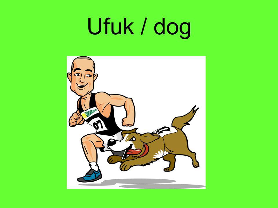 Ufuk / dog