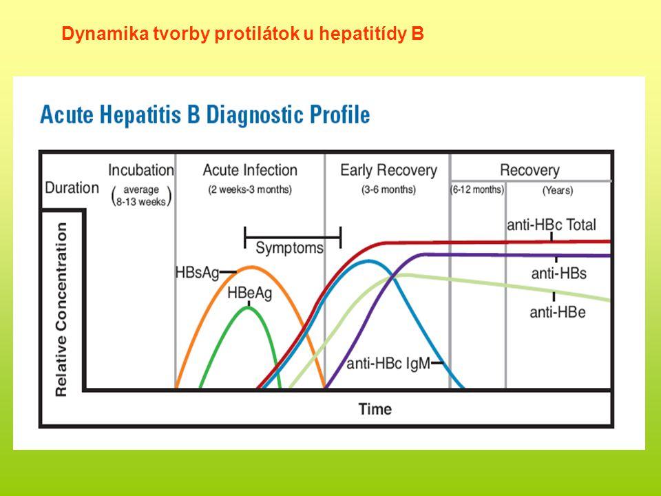 Dynamika tvorby protilátok u hepatitídy B
