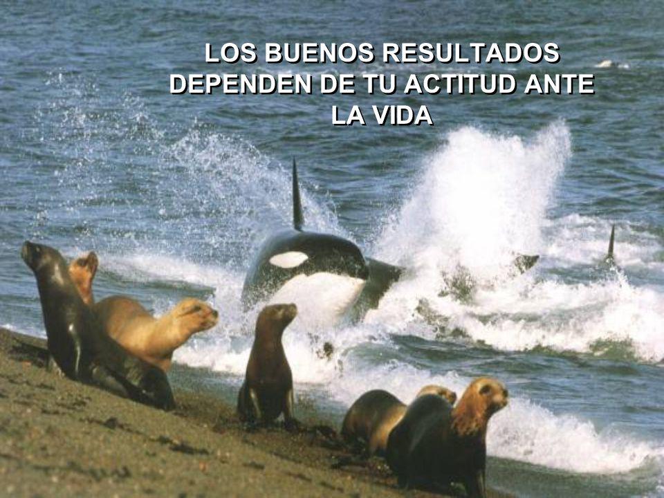 LOS BUENOS RESULTADOS DEPENDEN DE TU ACTITUD ANTE LA VIDA LOS BUENOS RESULTADOS DEPENDEN DE TU ACTITUD ANTE LA VIDA