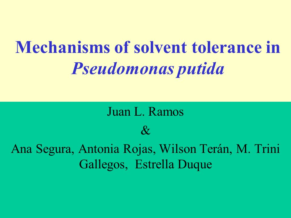 Mechanisms of solvent tolerance in Pseudomonas putida Juan L.