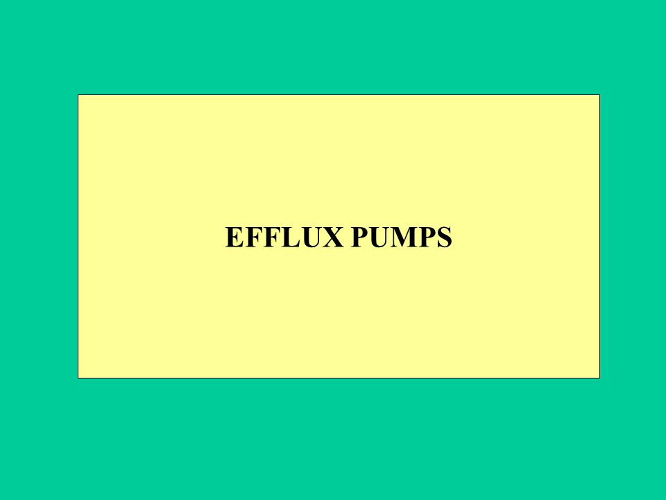 EFFLUX PUMPS