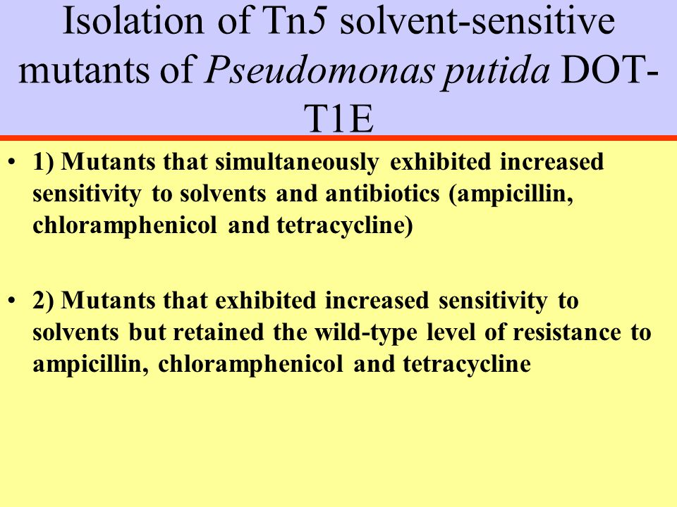 Isolation of Tn5 solvent-sensitive mutants of Pseudomonas putida DOT- T1E 1) Mutants that simultaneously exhibited increased sensitivity to solvents and antibiotics (ampicillin, chloramphenicol and tetracycline) 2) Mutants that exhibited increased sensitivity to solvents but retained the wild-type level of resistance to ampicillin, chloramphenicol and tetracycline