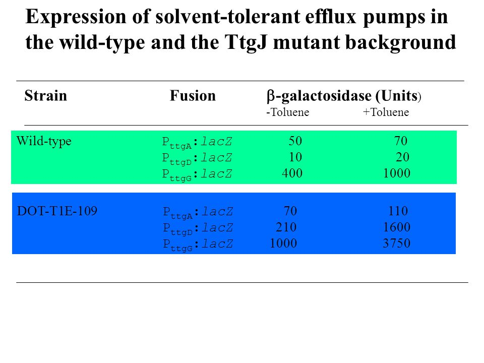 Expression of solvent-tolerant efflux pumps in the wild-type and the TtgJ mutant background StrainFusion  -galactosidase (Units ) -Toluene+Toluene Wild-type P ttgA :lacZ 50 70 P ttgD :lacZ 10 20 P ttgG :lacZ 400 1000 DOT-T1E-109 P ttgA :lacZ 70 110 P ttgD :lacZ 210 1600 P ttgG :lacZ 1000 3750