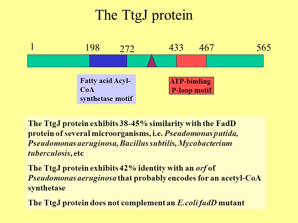 1 565198 272 433467 Fatty acid Acyl- CoA synthetase motif ATP-binding P-loop motif The TtgJ protein The TtgJ protein exhibits 38-45% similarity with the FadD protein of several microorganisms, i.e.