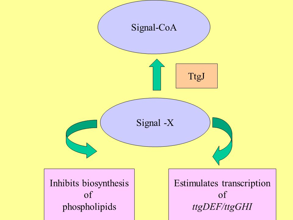 Signal-CoA Signal -X TtgJ Estimulates transcription of ttgDEF/ttgGHI Inhibits biosynthesis of phospholipids