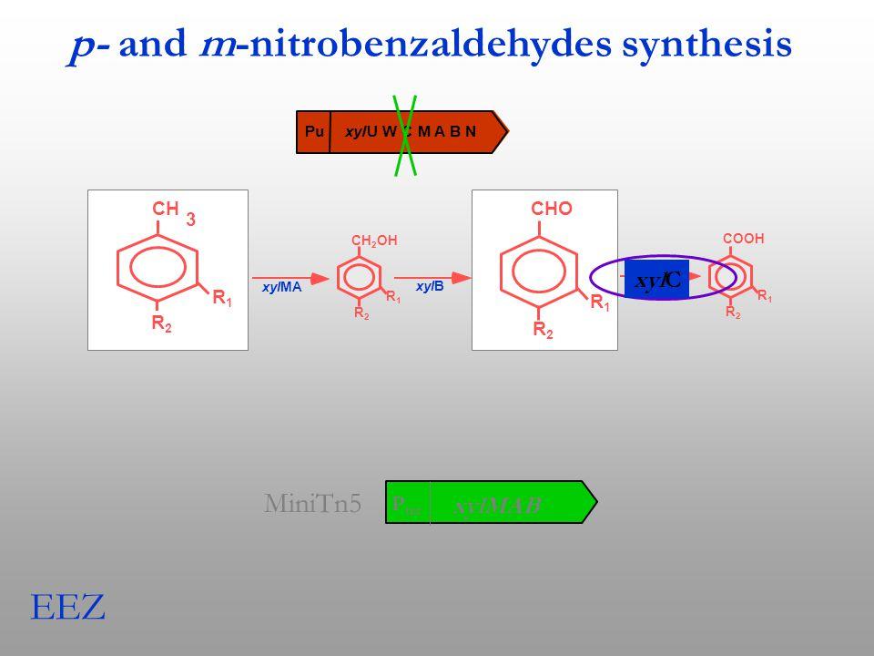 xyl U W C M A B N Pu CH 3 xylMA xylB R1R1 R2R2 CH 2 OH R1R1 R2R2 CHO R1R1 R2R2 xylC COOH R1R1 R2R2 EEZ CH 3 R1R1 R2R2 CHO R1R1 R2R2 p- and m-nitrobenzaldehydes synthesis xylC P trc xylMAB MiniTn5