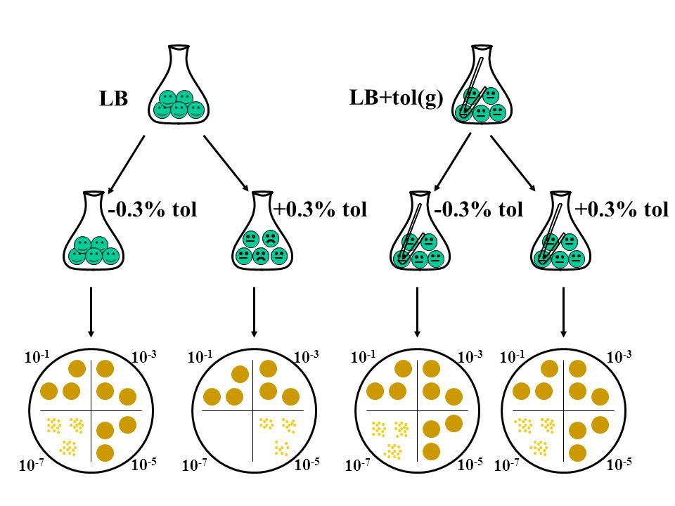 T1E T1E +tol 109+tol 109 1 2 3 4 5 6 7 8 Incorporation of 13 C in proteins Relative increase of 13 C 60530 120 60530 120 60530 120 60530 120