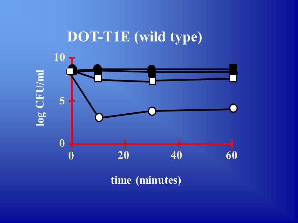 Signal-CoA Signal -X TtgJ Estimulates transcription of ttgDEF/ttgGHI Inhibits biosynthesis of phospholipids