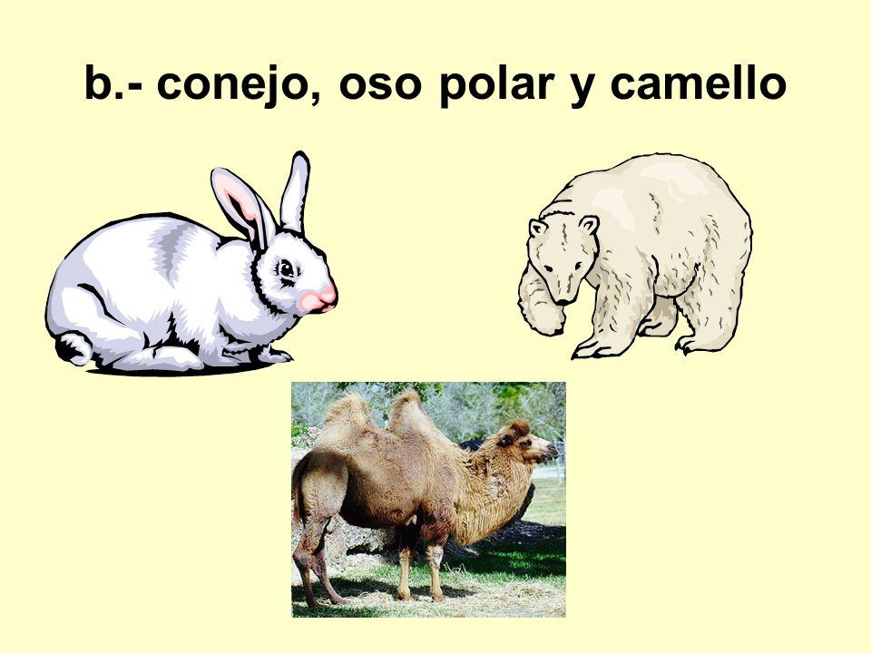 b.- conejo, oso polar y camello