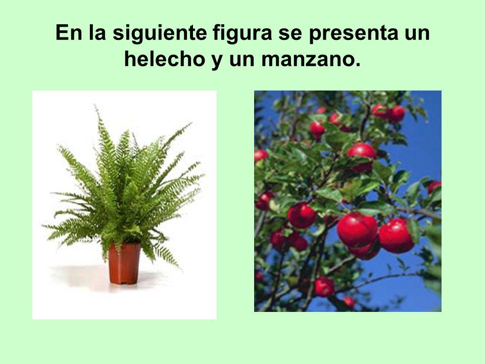 En la siguiente figura se presenta un helecho y un manzano.