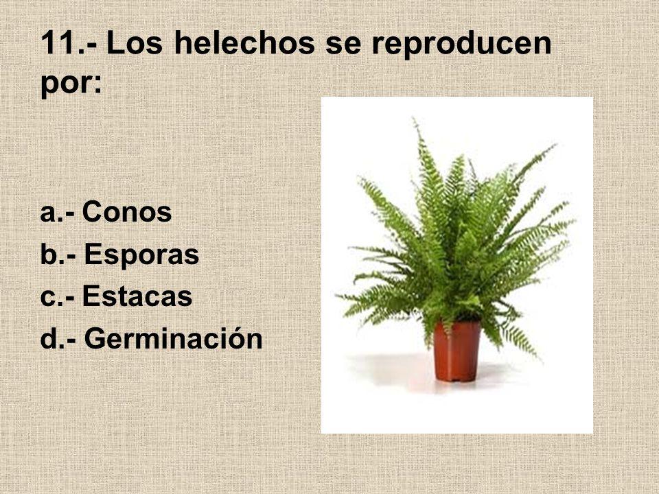 11.- Los helechos se reproducen por: a.- Conos b.- Esporas c.- Estacas d.- Germinación