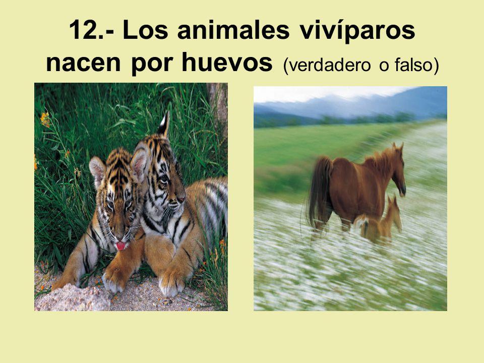 12.- Los animales vivíparos nacen por huevos (verdadero o falso)