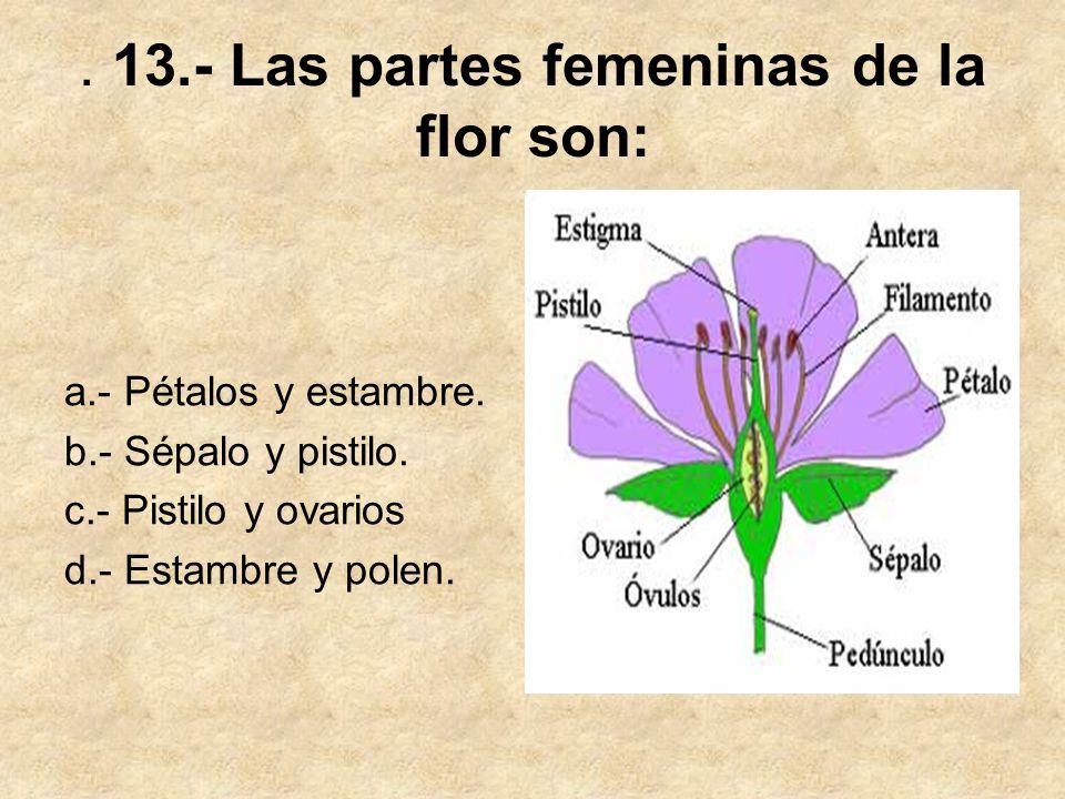 . 13.- Las partes femeninas de la flor son: a.- Pétalos y estambre. b.- Sépalo y pistilo. c.- Pistilo y ovarios d.- Estambre y polen.