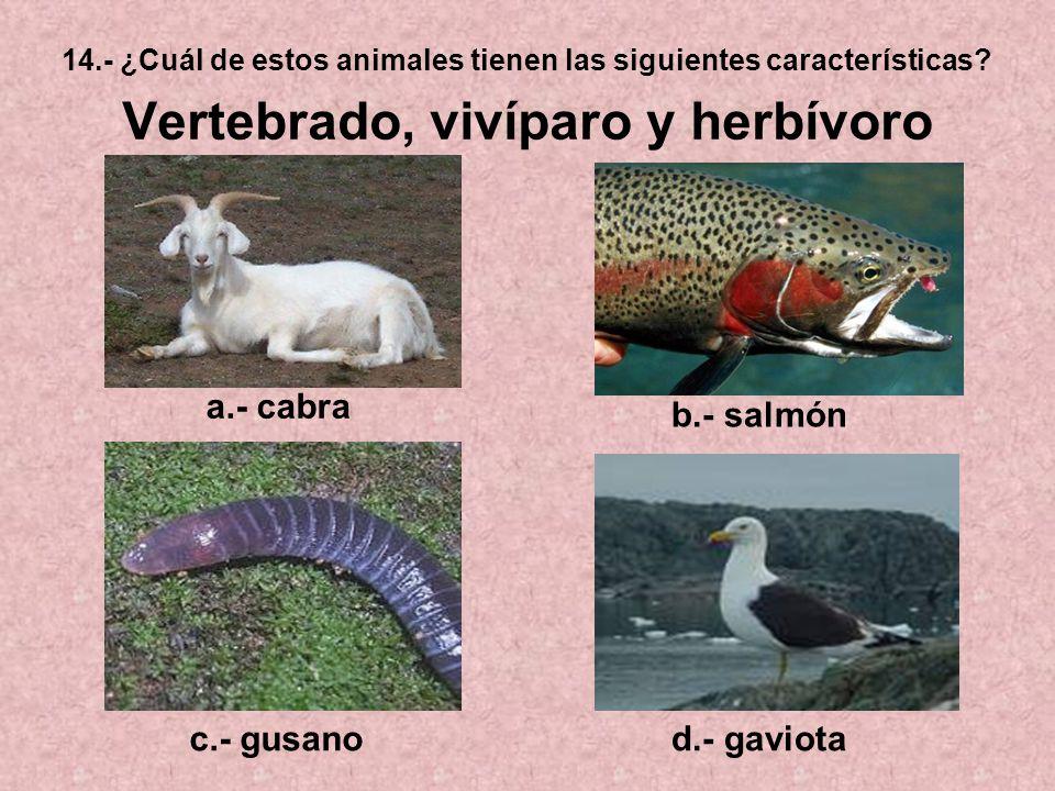 14.- ¿Cuál de estos animales tienen las siguientes características? Vertebrado, vivíparo y herbívoro a.- cabra b.- salmón c.- gusanod.- gaviota