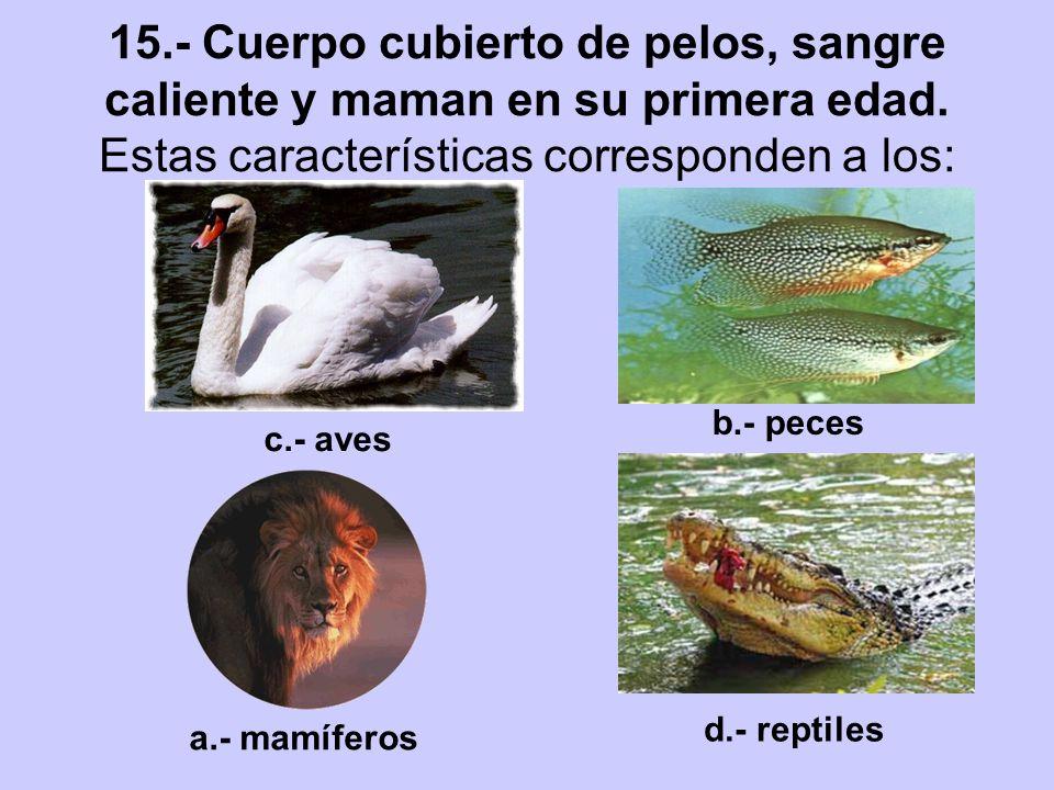 15.- Cuerpo cubierto de pelos, sangre caliente y maman en su primera edad. Estas características corresponden a los: a.- mamíferos b.- peces c.- aves