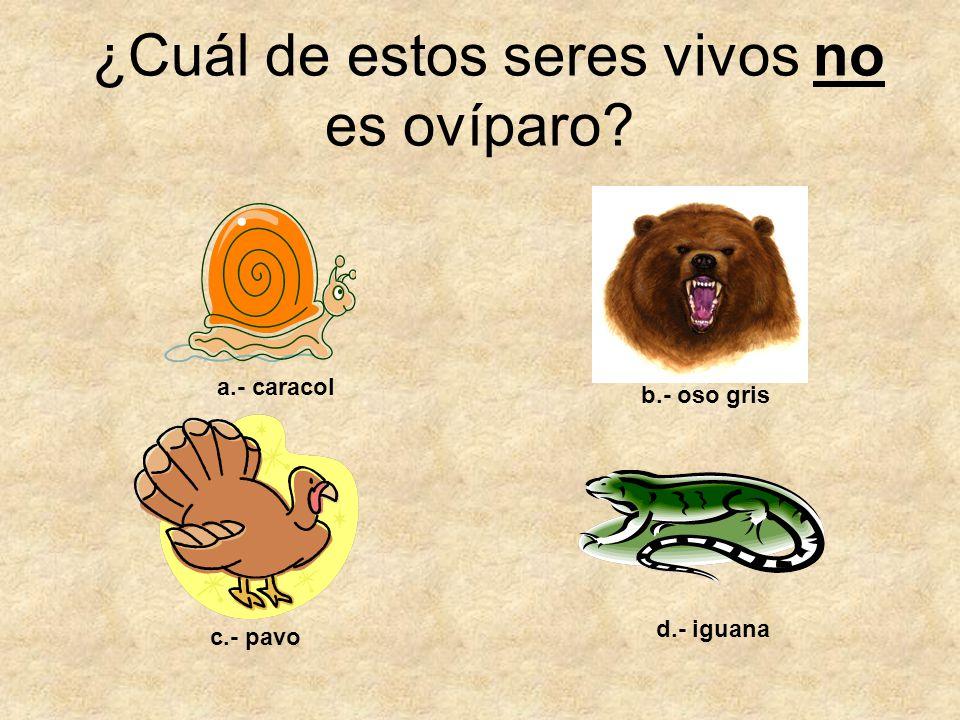 ¿Cuál de estos seres vivos no es ovíparo? a.- caracol b.- oso gris c.- pavo d.- iguana