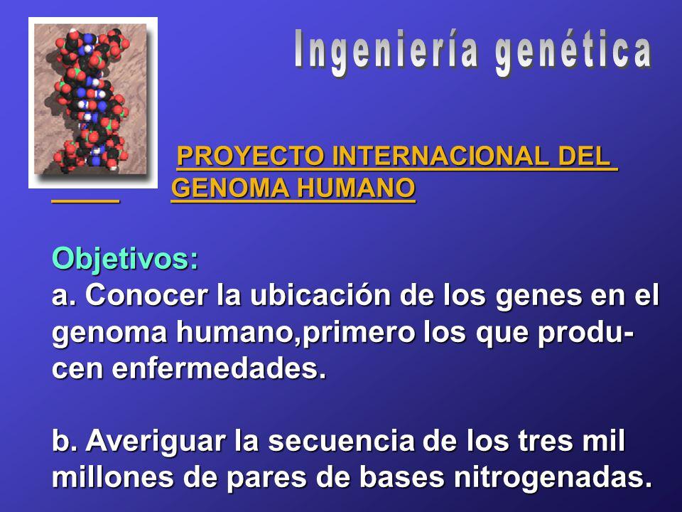 PROYECTO INTERNACIONAL DEL PROYECTO INTERNACIONAL DEL GENOMA HUMANO GENOMA HUMANOObjetivos: a.