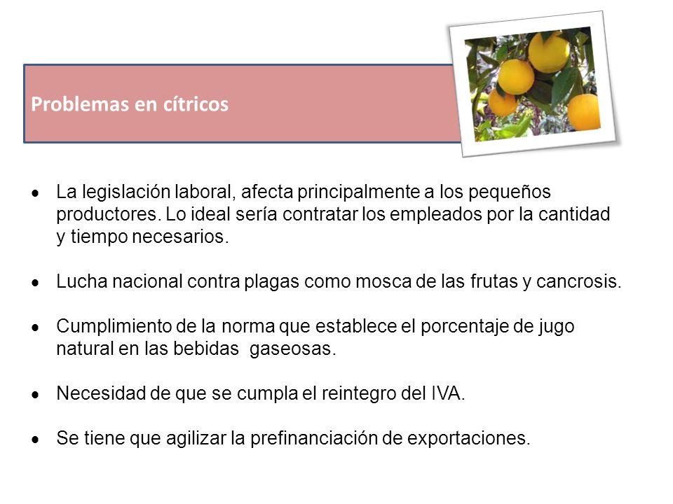 Problemas en cítricos  La legislación laboral, afecta principalmente a los pequeños productores.