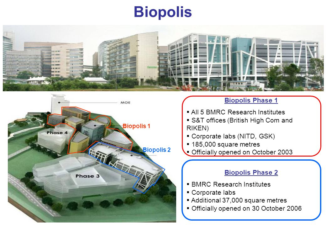 Biopolis Biopolis Phase 1  All 5 BMRC Research Institutes  S&T offices (British High Com and RIKEN)  Corporate labs (NITD, GSK)  185,000 square metres  Officially opened on October 2003 Biopolis Phase 2  BMRC Research Institutes  Corporate labs  Additional 37,000 square metres  Officially opened on 30 October 2006 Biopolis 1 Biopolis 2