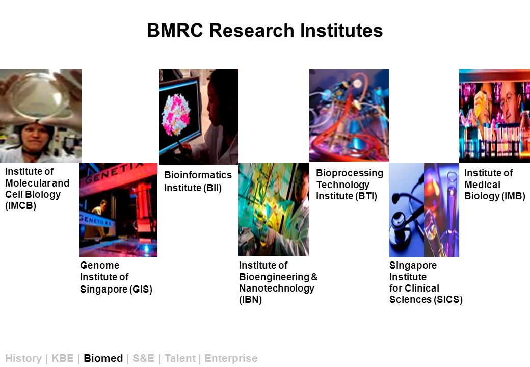 BMRC Research Institutes Genome Institute of Singapore (GIS) Institute of Bioengineering & Nanotechnology (IBN) Bioinformatics Institute (BII) Institute of Medical Biology (IMB) Singapore Institute for Clinical Sciences (SICS) Bioprocessing Technology Institute (BTI) Institute of Molecular and Cell Biology (IMCB) History | KBE | Biomed | S&E | Talent | Enterprise