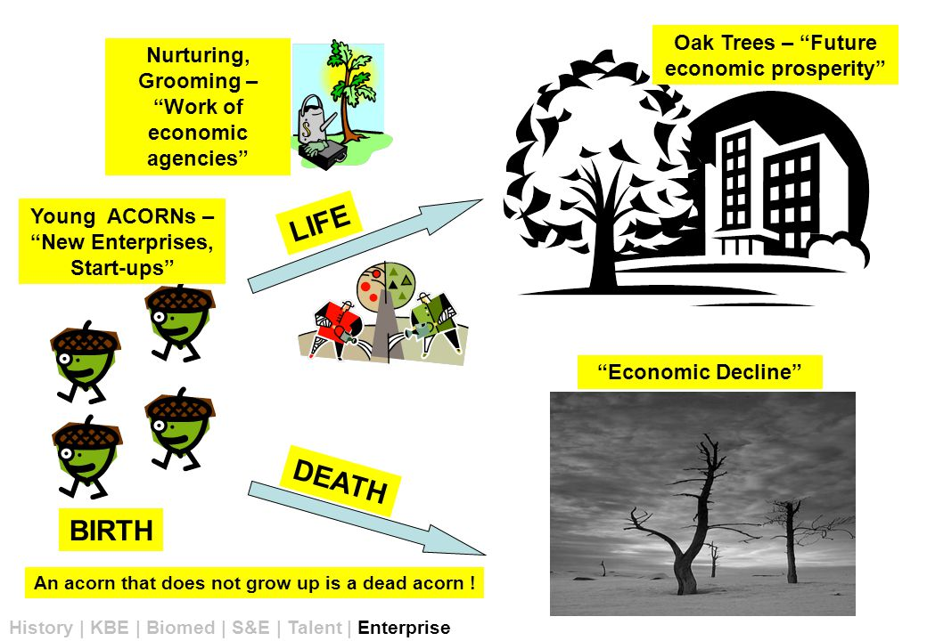 Young ACORNs – New Enterprises, Start-ups Nurturing, Grooming – Work of economic agencies Oak Trees – Future economic prosperity Economic Decline History | KBE | Biomed | S&E | Talent | Enterprise LIFE DEATH BIRTH An acorn that does not grow up is a dead acorn !