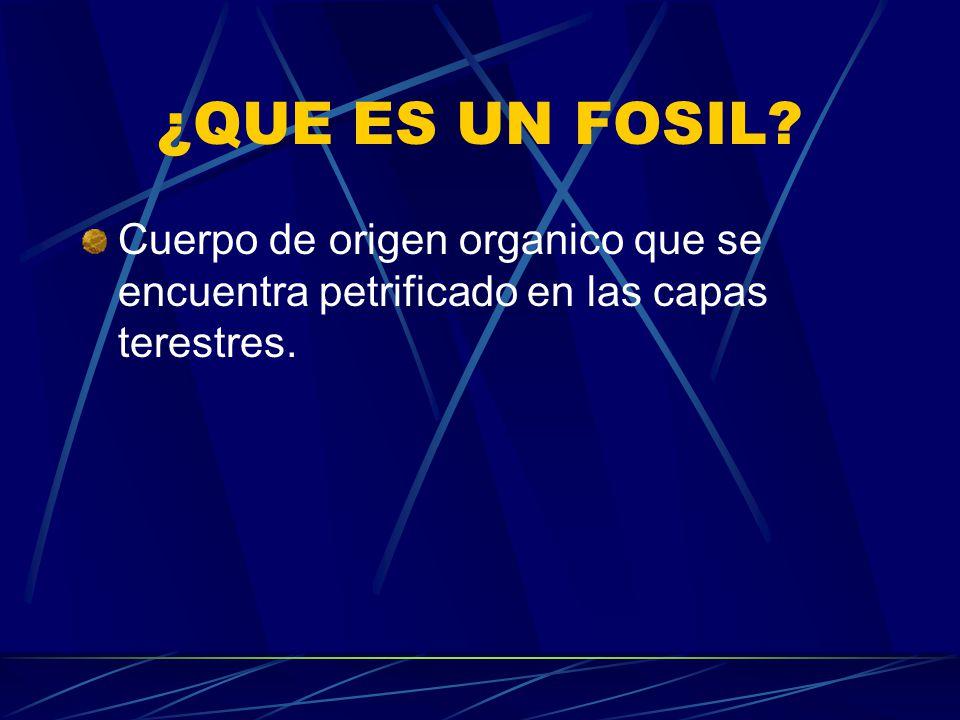 LOS FOSILES POR: SARA L. VEGA ROQUE RAMON VEGA ROQUE
