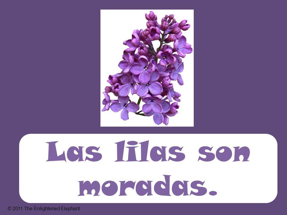 Las lilas son moradas. © 2011 The Enlightened Elephant