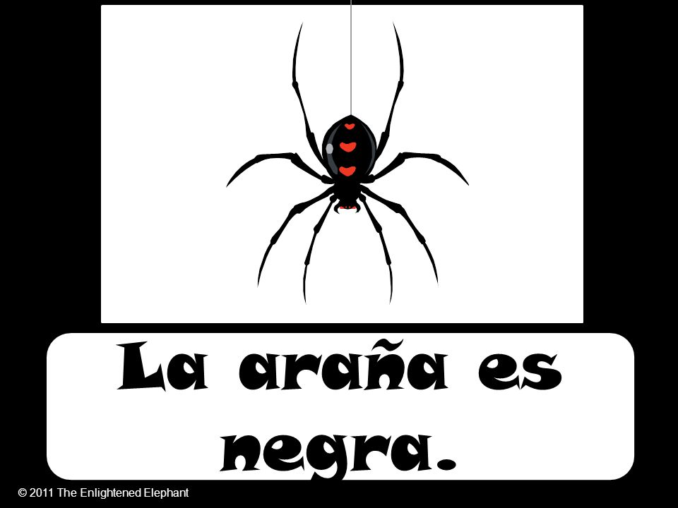 La araña es negra. © 2011 The Enlightened Elephant