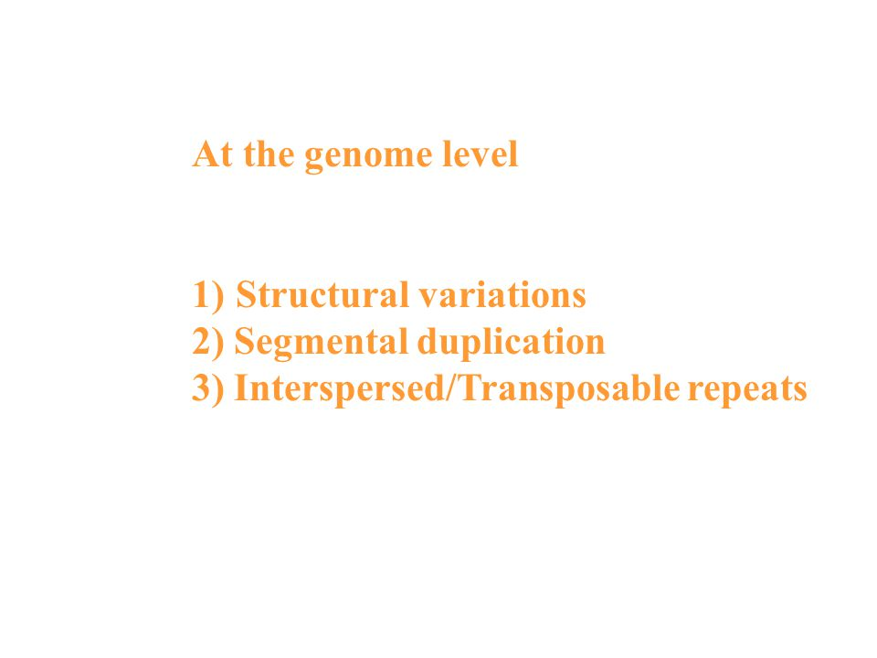 At the genome level 1)Structural variations 2) Segmental duplication 3) Interspersed/Transposable repeats