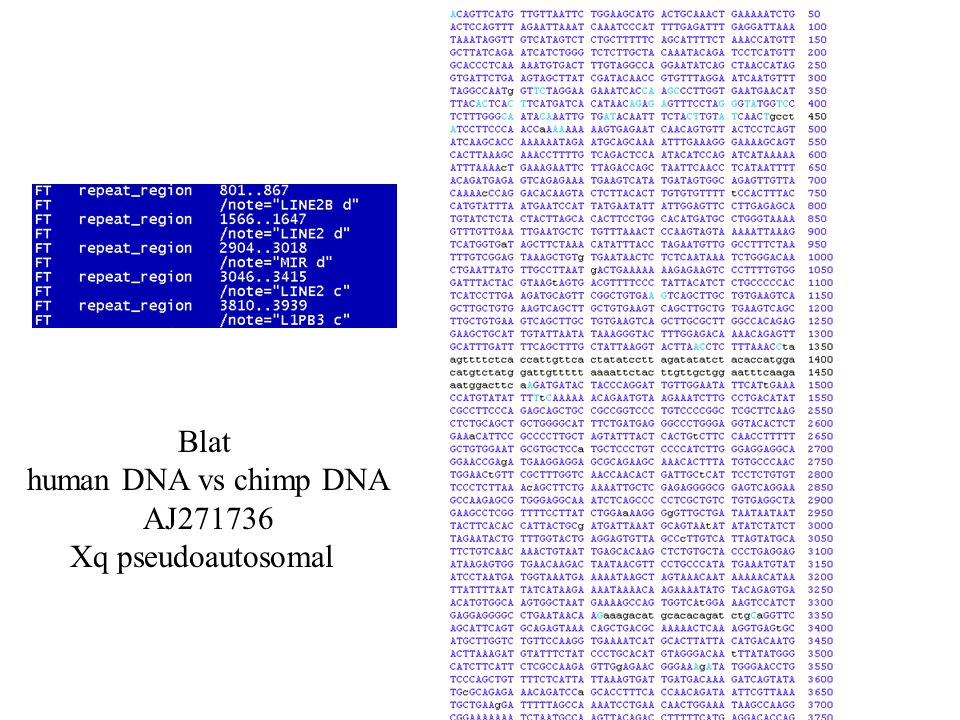 Blat human DNA vs chimp DNA AJ271736 Xq pseudoautosomal