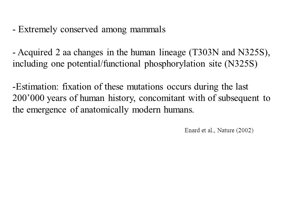 - Extremely conserved among mammals - Acquired 2 aa changes in the human lineage (T303N and N325S), including one potential/functional phosphorylation site (N325S) -Estimation: fixation of these mutations occurs during the last 200'000 years of human history, concomitant with of subsequent to the emergence of anatomically modern humans.