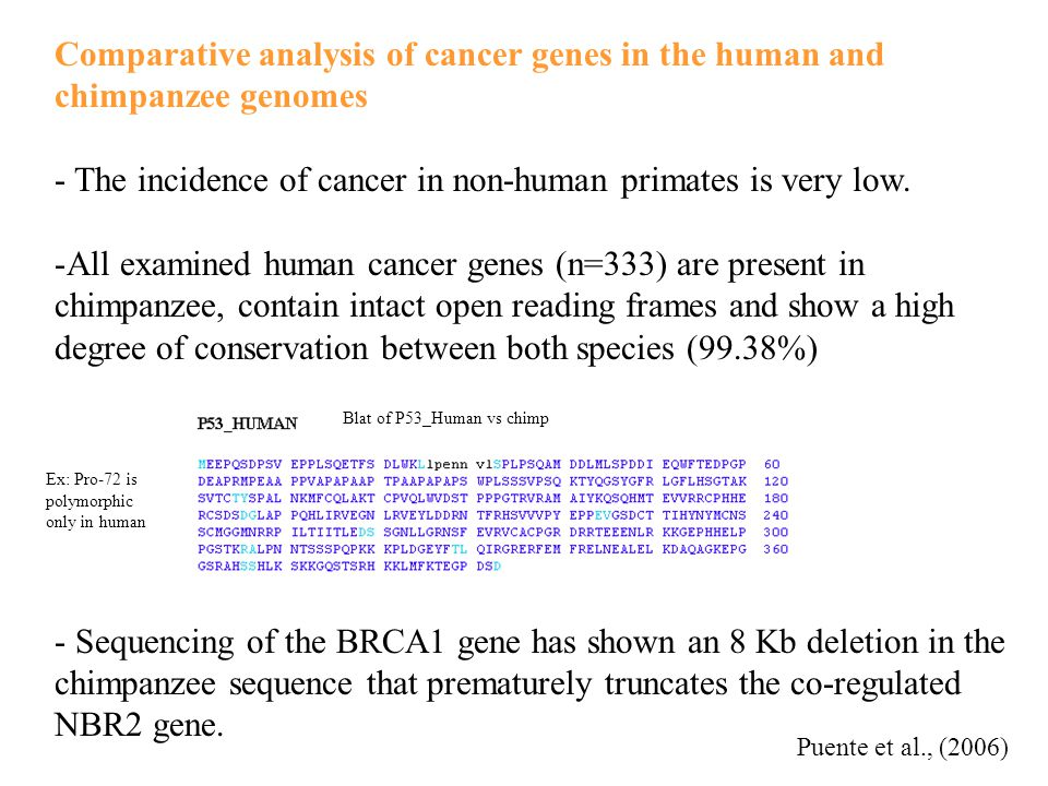 Comparative analysis of cancer genes in the human and chimpanzee genomes - The incidence of cancer in non-human primates is very low.