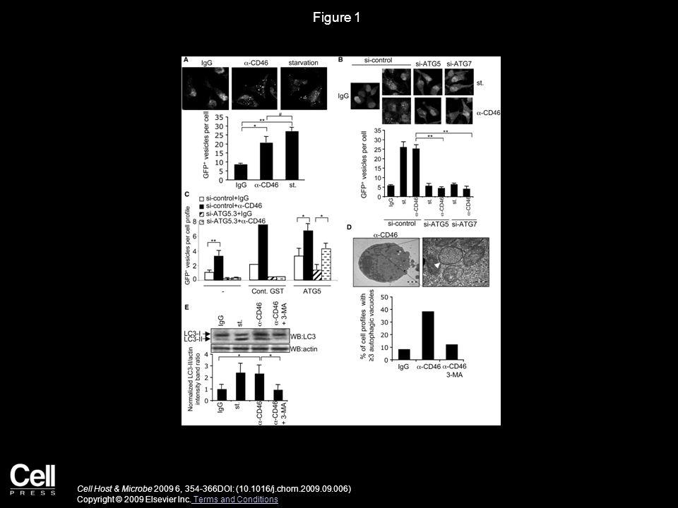 Figure 2 Cell Host & Microbe 2009 6, 354-366DOI: (10.1016/j.chom.2009.09.006) Copyright © 2009 Elsevier Inc.