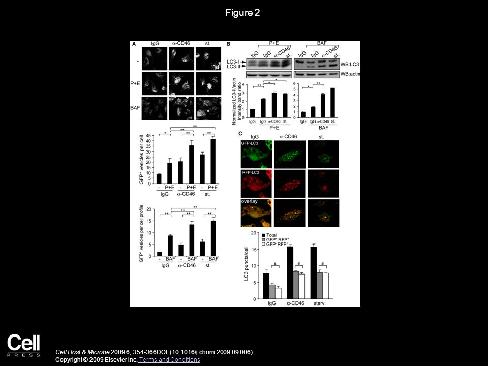 Figure 3 Cell Host & Microbe 2009 6, 354-366DOI: (10.1016/j.chom.2009.09.006) Copyright © 2009 Elsevier Inc.