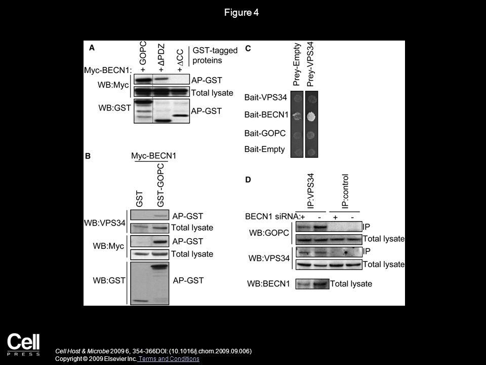 Figure 5 Cell Host & Microbe 2009 6, 354-366DOI: (10.1016/j.chom.2009.09.006) Copyright © 2009 Elsevier Inc.