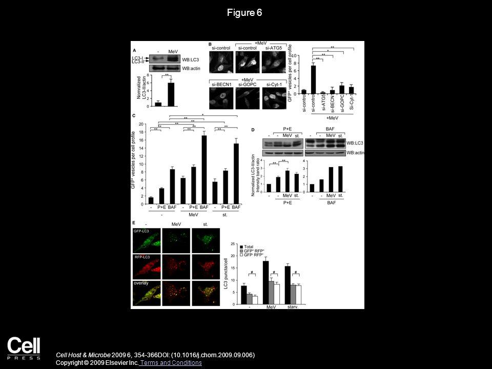 Figure 7 Cell Host & Microbe 2009 6, 354-366DOI: (10.1016/j.chom.2009.09.006) Copyright © 2009 Elsevier Inc.