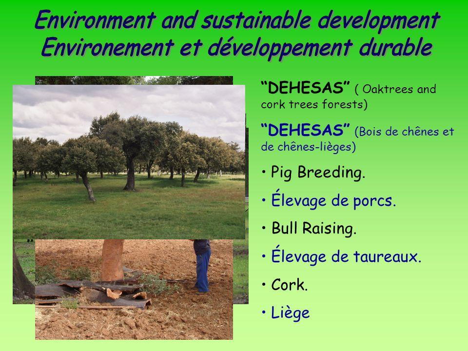 DEHESAS ( Oaktrees and cork trees forests) DEHESAS (Bois de chênes et de chênes-lièges) Pig Breeding.