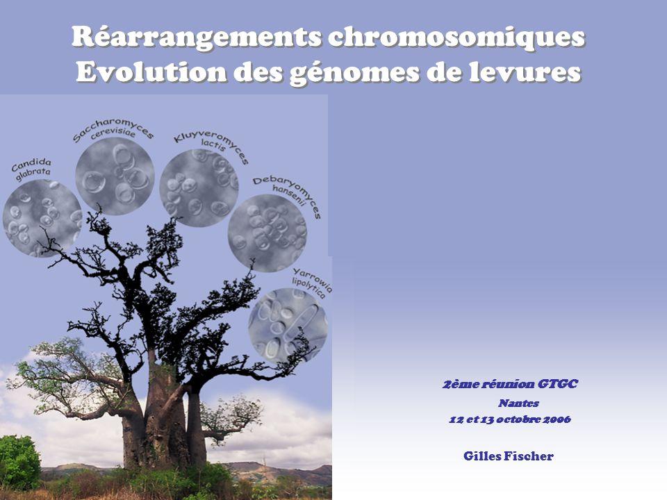 Réarrangements chromosomiques Evolution des génomes de levures 2ème réunion GTGC Nantes 12 et 13 octobre 2006 Gilles Fischer