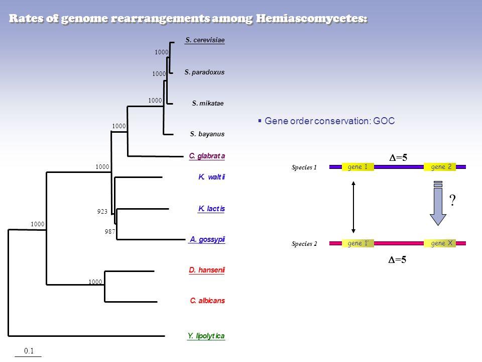 0.1 923 987 1000 S.paradoxus S.mikatae S.bayanus C. albicans K. waltii S.cerevisiae C. glabrata A. gossypii K. lactis D. hansenii Y. lipolytica  Gene