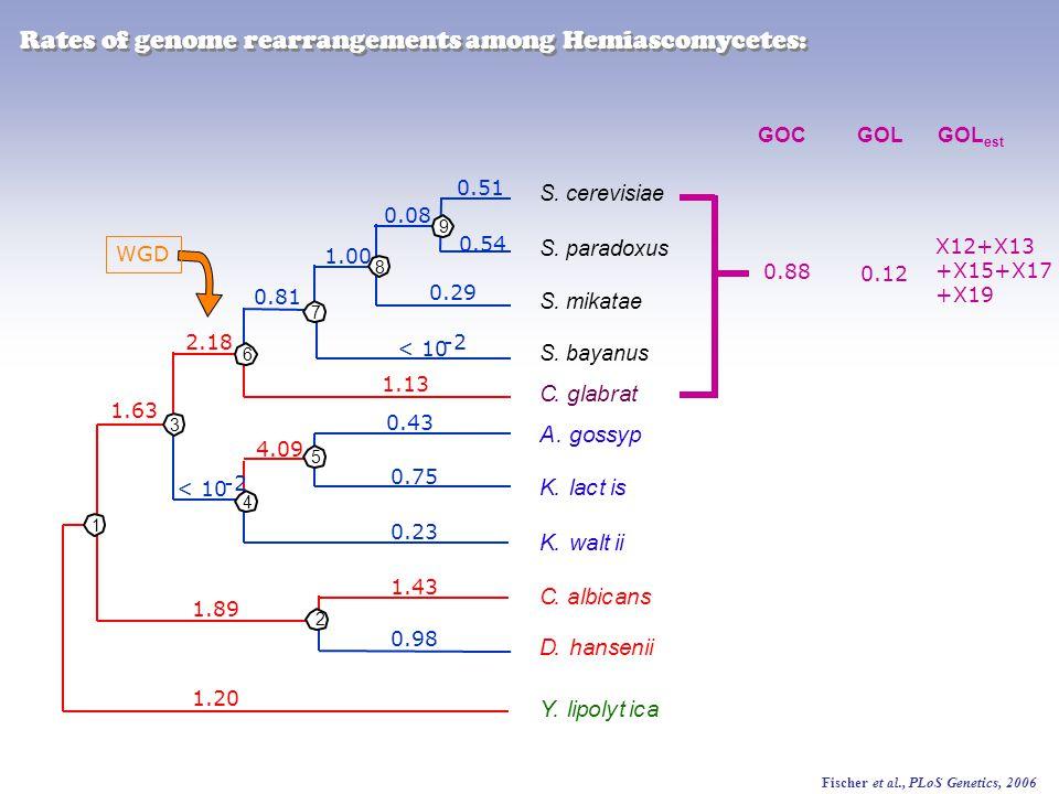 Fischer et al., PLoS Genetics, 2006 1 1.20 1.89 1.43 0.98 9 8 5 1.63 0.23 4.09 0.75 0.43 2.18 1.13 0.81 1.00 0.29 0.08 0.54 0.51 4 2 3 6 7 < 10 -2 < 10 -2 WGD K.