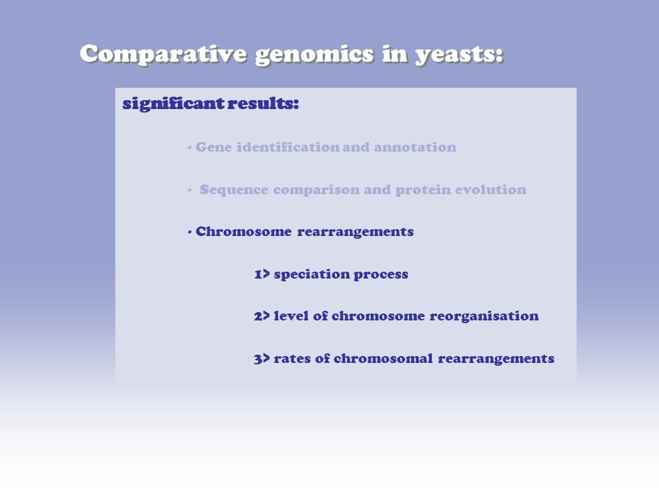 Comparative genomics in yeasts: significant results: - Gene identification and annotation - Sequence comparison and protein evolution - Chromosome rearrangements 1> speciation process 2> level of chromosome reorganisation 3> rates of chromosomal rearrangements