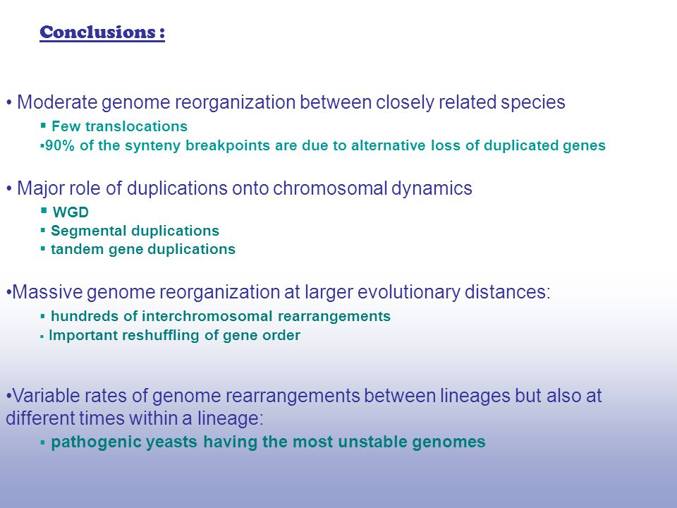 Moderate genome reorganization between closely related species  Few translocations  90% of the synteny breakpoints are due to alternative loss of duplicated genes Major role of duplications onto chromosomal dynamics  WGD  Segmental duplications  tandem gene duplications Massive genome reorganization at larger evolutionary distances:  hundreds of interchromosomal rearrangements  Important reshuffling of gene order Variable rates of genome rearrangements between lineages but also at different times within a lineage:  pathogenic yeasts having the most unstable genomes Conclusions :