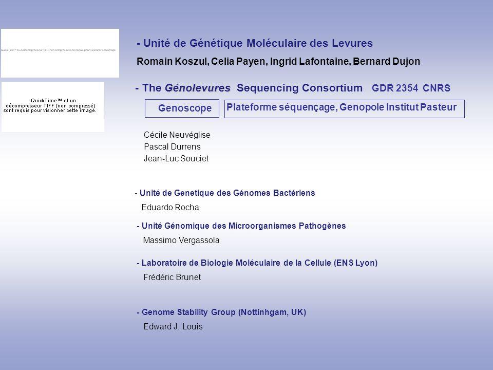 - Unité de Génétique Moléculaire des Levures Romain Koszul, Celia Payen, Ingrid Lafontaine, Bernard Dujon Génolevures - The Génolevures Sequencing Con