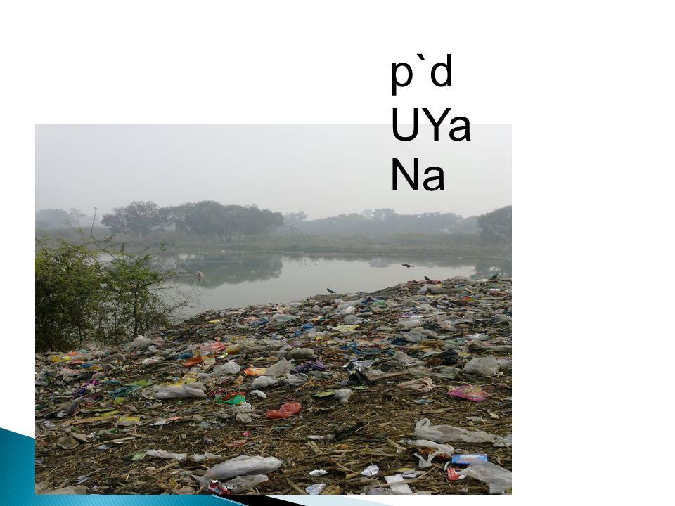 p`d UYa Na
