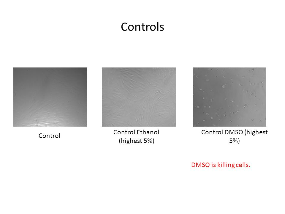 Controls Control Control DMSO (highest 5%) Control Ethanol (highest 5%) DMSO is killing cells.
