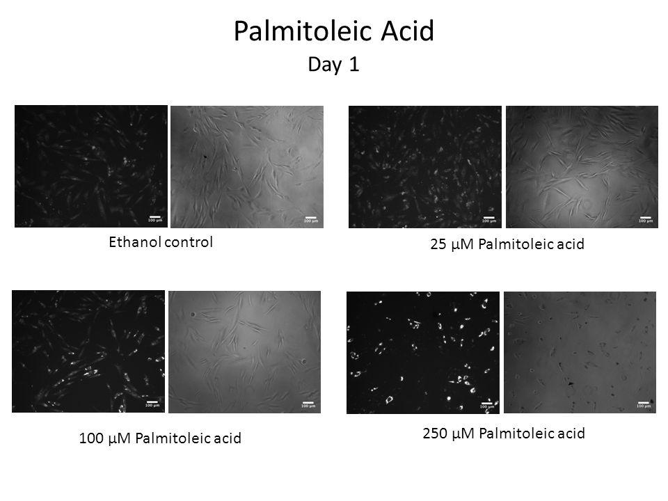 Palmitoleic Acid Day 1 Ethanol control 25 μM Palmitoleic acid 100 μM Palmitoleic acid 250 μM Palmitoleic acid