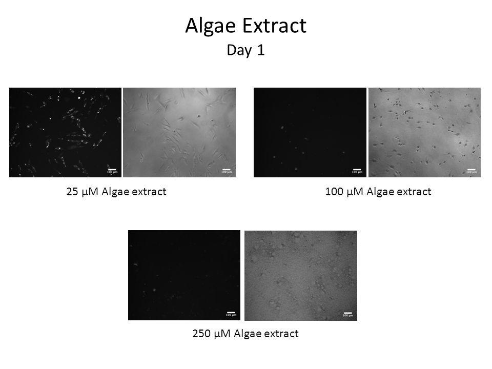 Algae Extract Day 1 25 μM Algae extract100 μM Algae extract 250 μM Algae extract